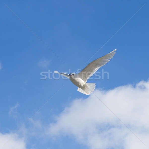 Beautiful gull against the sky Stock photo © All32