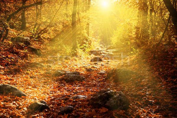 Najaar bos stralen zon mooie boom Stockfoto © All32