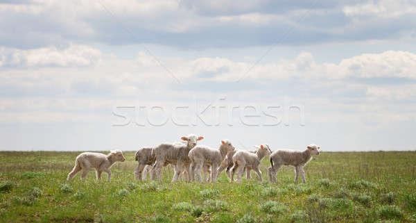 Blauwe hemel wolken gras natuur zomer Stockfoto © All32