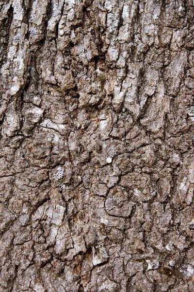 écorce arbre peuvent utilisé herbe résumé Photo stock © All32