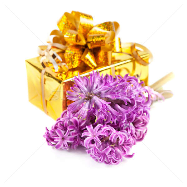 Hyacinth flowers and gift box  Stock photo © All32