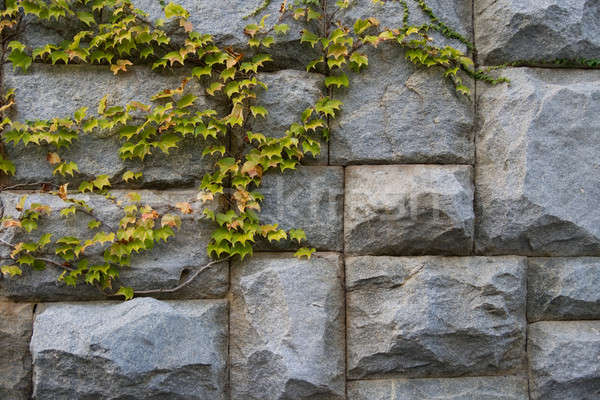 Taş granit duvar yeşil yaprakları can kullanılmış Stok fotoğraf © All32