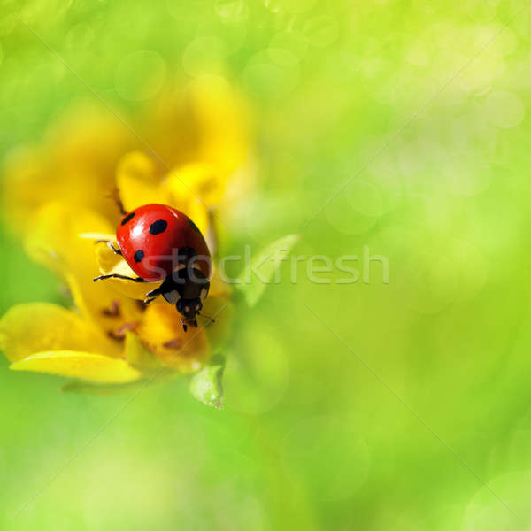 Beautiful ladybird on a flower Stock photo © All32