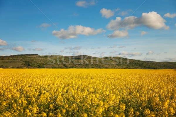 Campo blue sky nuvens primavera grama natureza Foto stock © All32
