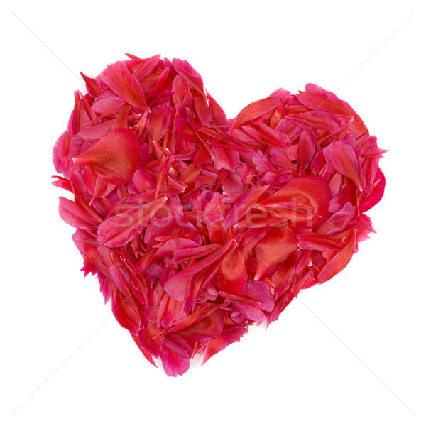 Red heart built of peony petals. Stock photo © All32