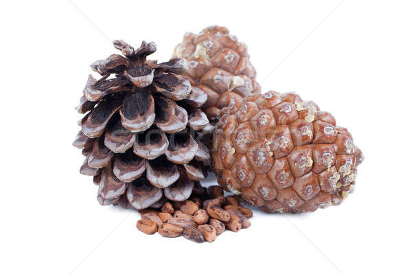 Cedar cones Stock photo © All32