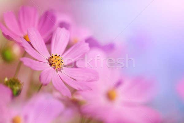 Mooie bloemen hemel groene witte roze Stockfoto © All32