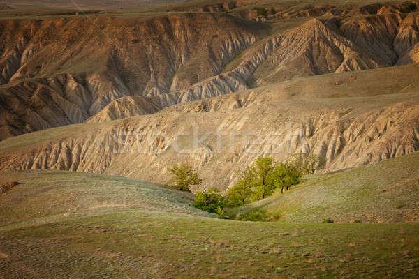 小 オアシス 木 風景 背景 岩 ストックフォト © All32
