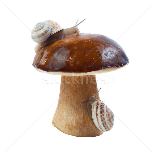 White fungus and snails Stock photo © All32