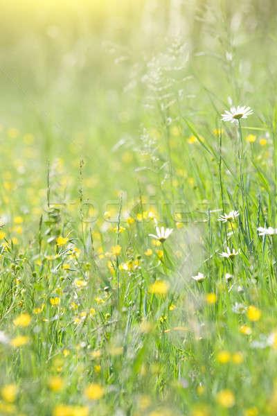 Groen gras bloemen weide voorjaar zomer groene Stockfoto © All32