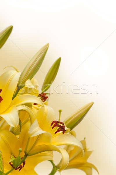 Amarillo lirios flor naturaleza hoja Foto stock © All32