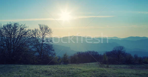 Bos berg dawn zon hemel zonsondergang Stockfoto © All32