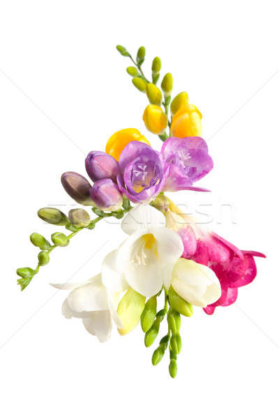 Floraison isolé blanche nature fond vert Photo stock © All32