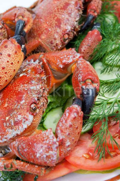 Stone crabs Stock photo © All32