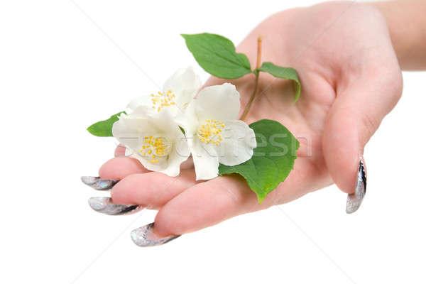 Tak palm geïsoleerd witte bloem boom Stockfoto © All32