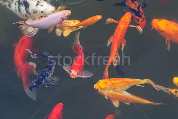 Kleurrijk vis vijver water natuur Stockfoto © All32