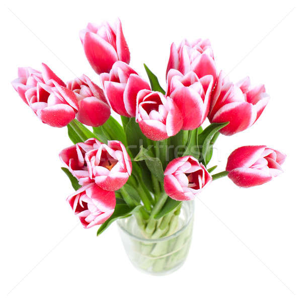 Beautiful red tulips are a top view Stock photo © All32