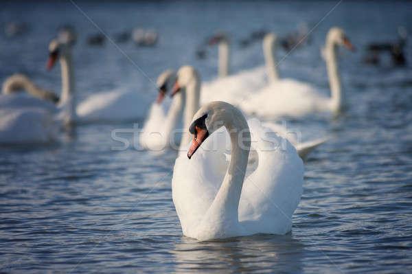 白 水 家族 自然 海 ストックフォト © All32