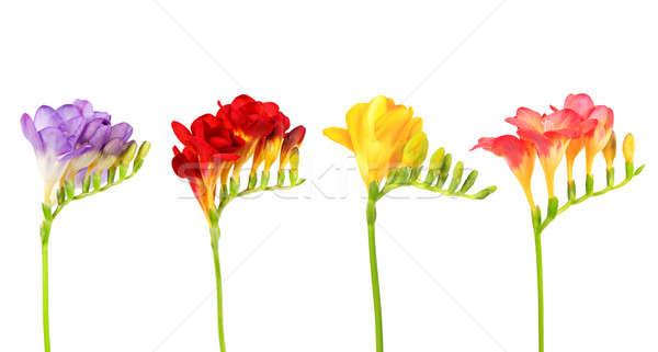 Geïsoleerd Pasen tuin bladeren Rood mooie Stockfoto © All32