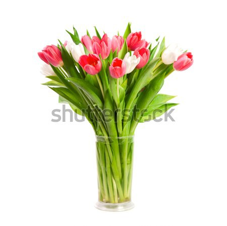 Tulips isolated on white background  Stock photo © All32