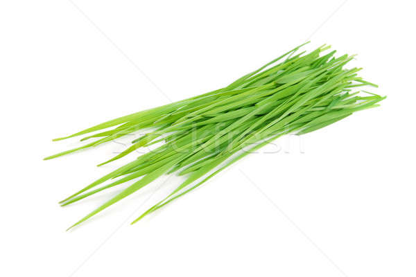 Coupé herbe verte isolé blanche herbe résumé Photo stock © All32