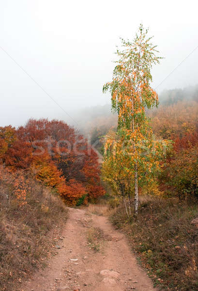 Stock photo: Autumn. Birch by road.