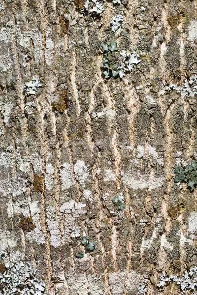 The bark of the tree.  Stock photo © All32