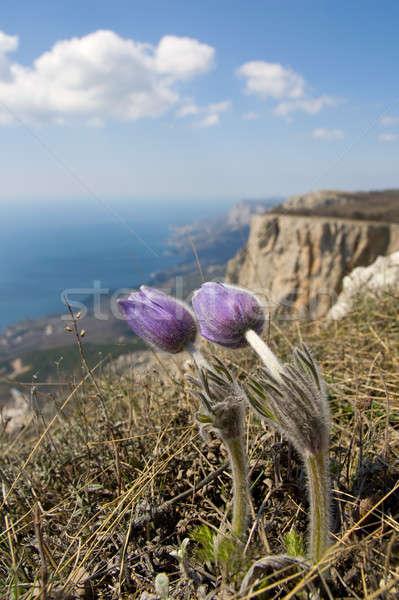 Bloemen hoog klif boven zee wolken Stockfoto © All32