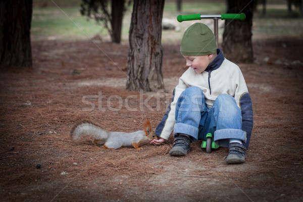 мальчика белку рук лесу стороны ребенка Сток-фото © All32