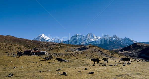 Alpino alto grama neve montanha Foto stock © All32