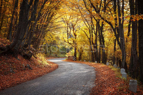 Road in the autumn forest Stock photo © All32