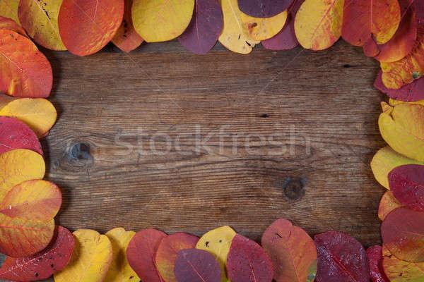 Najaar blad textuur natuur oranje Stockfoto © All32