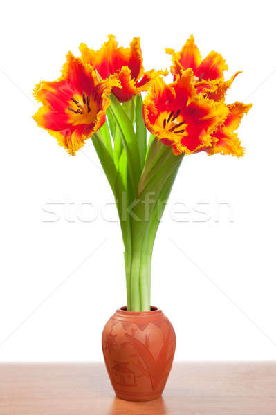 Beautiful tulips in a clay pot. Stock photo © All32