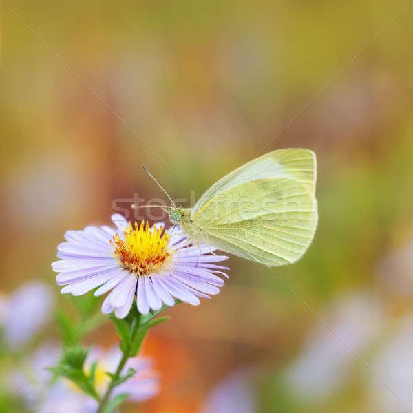 бабочка синий цветок природы лист фон зеленый Сток-фото © All32