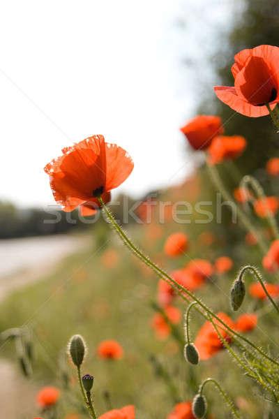 Beautiful flowers  Stock photo © All32