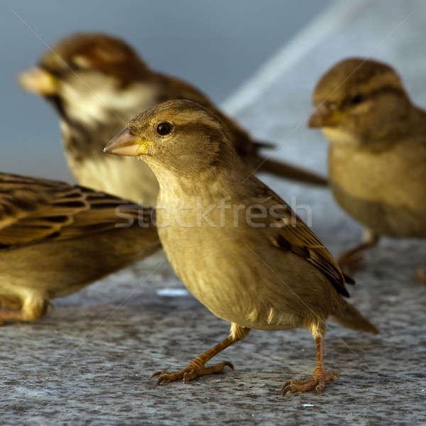 Doğa kuş tüy hayvan güzel Stok fotoğraf © All32
