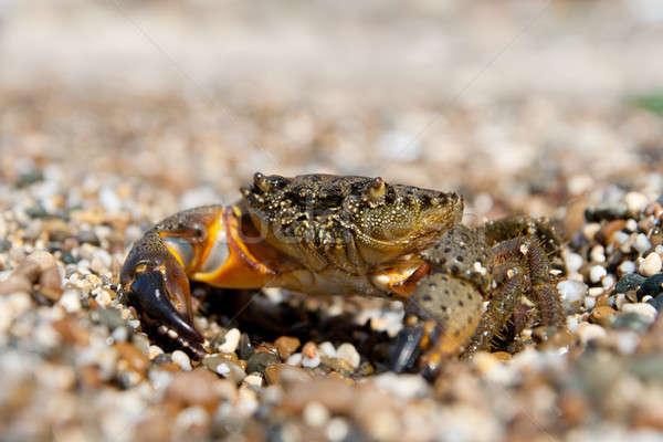Piatră crab ochi natură fundal vară Imagine de stoc © All32