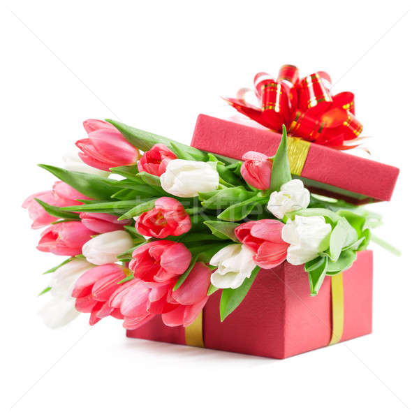Tulips in a gift box Stock photo © All32