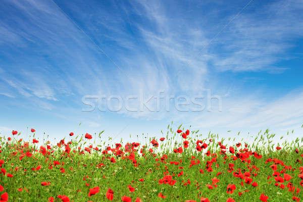 Zdjęcia stock: Czerwony · maki · Błękitne · niebo · chmury · wiosną · charakter