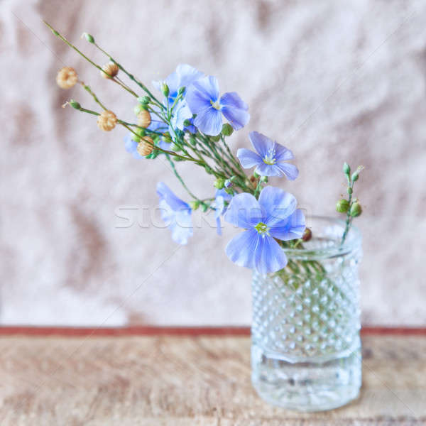 Sprigs of flax with flowers  Stock photo © All32