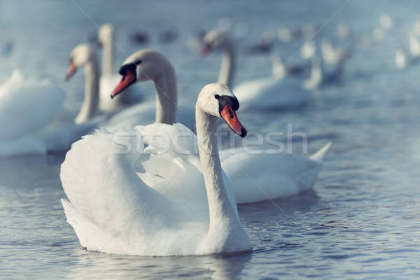 белый воды красивой красоту фермы Сток-фото © All32