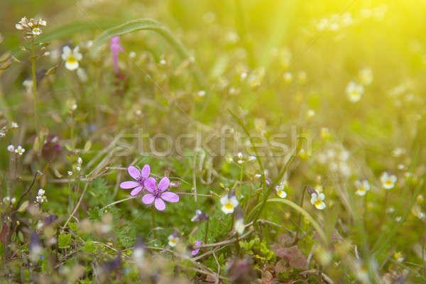 緑の草 夏 緑 美しい 草原 ストックフォト © All32