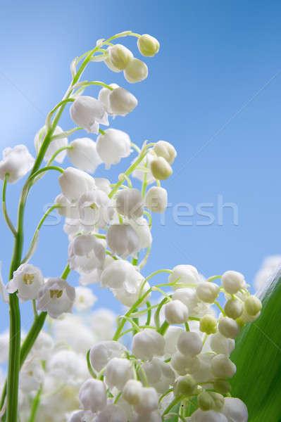 Bloem lelie vallei Blauw bloemen voorjaar Stockfoto © All32