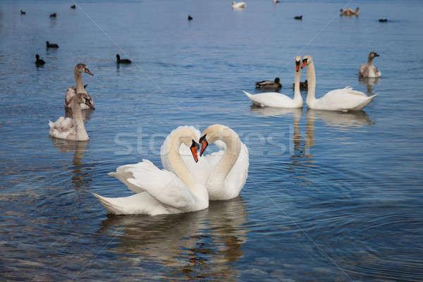 Fehér lebeg víz szeretet természet tenger Stock fotó © All32