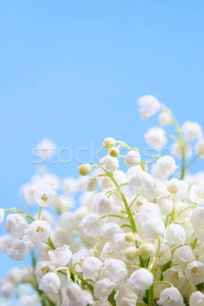 Fleur Lily vallée bleu fleurs printemps Photo stock © All32