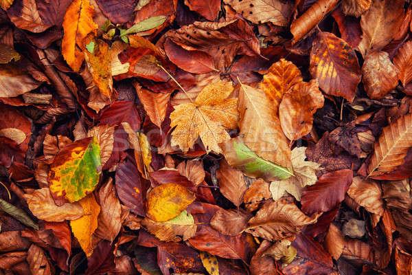 Coloré bois fond orange automne Photo stock © All32