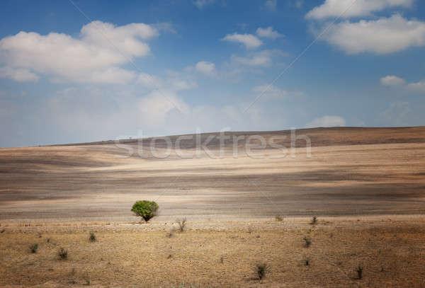 Сток-фото: одиноко · дерево · области · Blue · Sky · облака · небе