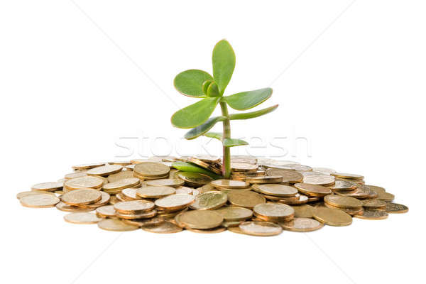 Foto stock: Creciente · monedas · aislado · blanco