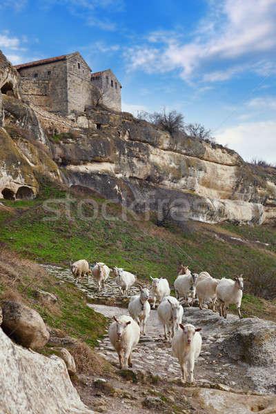 Goats grazing on the hillside Stock photo © All32