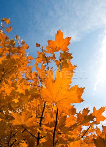 Laisse ciel arbre nuages bois Photo stock © All32